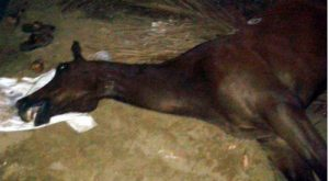 16-04-16 horse