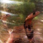 വിദ്യാർത്ഥിനിയെ പാമ്പ് കടിച്ചെന്നു സംശയം – ഉടൻ ചികിത്സ ലഭ്യമാക്കി അധ്യാപകർ