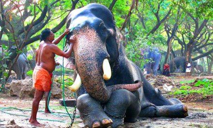 ടൂറിസം വികസനം – ഗുരുവായൂരിന് 102 കോടി രൂപയുടെ പദ്ധതികള് അനുവദിക്കും