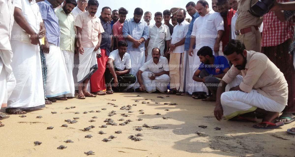 പുത്തന് കടപ്പുറത്ത് 103 കടലാമകുഞ്ഞുങ്ങളെ കടലിലിറക്കി