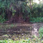 കക്കൂസ് മാലിന്യം റോഡരികിലെ കുളത്തില് തള്ളുന്നത് പതിവാകുന്നു