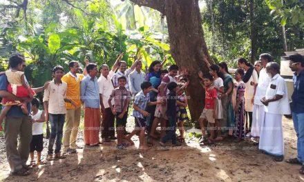 ജനകീയ കൂട്ടായ്മയില് നാട്ടുമാവുകള്ക്ക് 'പുനര്ജനി'