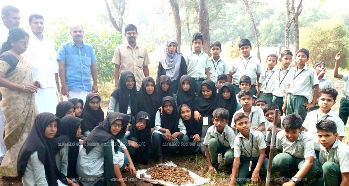 മന്ദലാംകുന്ന് ഫിഷറീസ് യു പി സ്കൂളിലെ കൂർക്ക കൃഷിയിൽ 100 മേനി വിളവ്