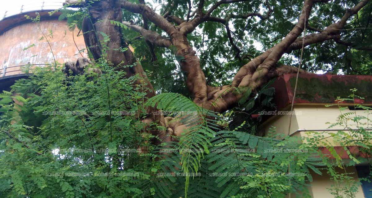 നഗര മധ്യത്തിലെ രജിസ്ട്രാഫീസിനു മേല് കൂറ്റന് മരം കടപുഴകി വീണു